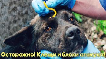 ОСТОРОЖНО! КЛЕЩИ И БЛОХИ АТАКУЮТ! Как уберечь животное от укуса клеща? Советы ветеринарного врача.