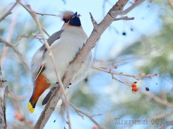 Птичьи фотострасти (продолжение)