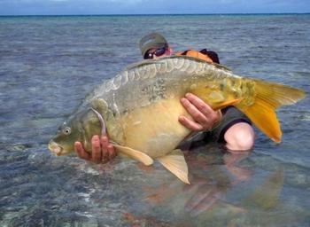 Двойственные ответы на вопросы о том, к чему снится поймать большую рыбу