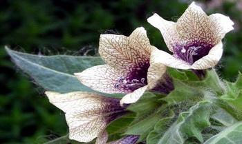 Токсичная природа: 10 ядов, растущих на земле