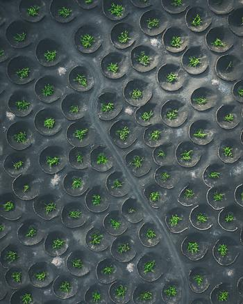 Узоры Земли в фотографиях Пшемека Шевчика