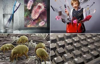 10 предметов, бактерий на которых гораздо больше, чем под ободком унитаза