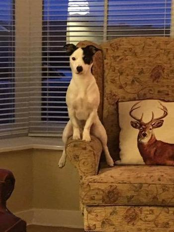Собаки, с которыми не бывает скучно
