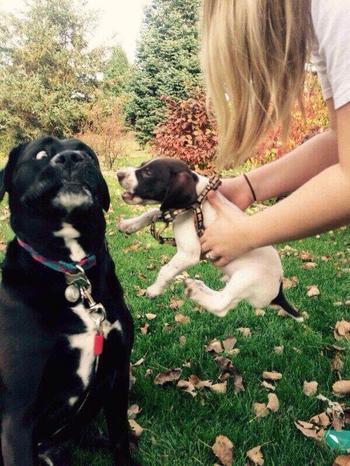 17 отважных псов, которые… испугались такой ерунды