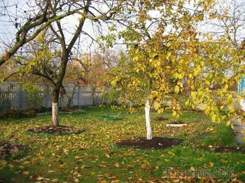 Осенней  (Стих)