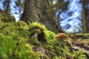 17 удивительных фактов о грибах