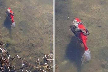 30 прикольных фотографий с лягушками для поднятия настроения