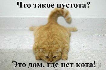 Когда у вас есть кот