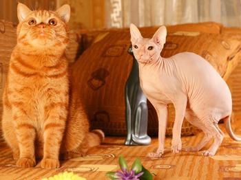 Самые редкие и необычные породы кошек