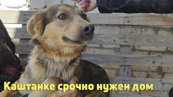 Ищем дом для Каштанки - самой дружелюбной собаки!