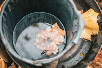 5 дел, которые необходимо сделать с виноградом в октябре