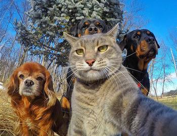 Прикольные автопортреты (то есть селфи) животных
