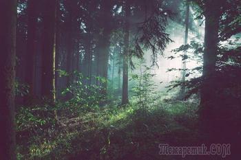 12 жутких историй о самых часто посещаемых лесах в мире
