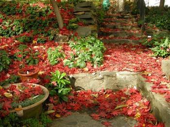 8 секретов размещения растений в саду