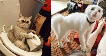 Подборка снимков смешных котиков, которые не дают скучать хозяевам