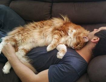 Почему многие коты любят спать, умостившись на человека сверху