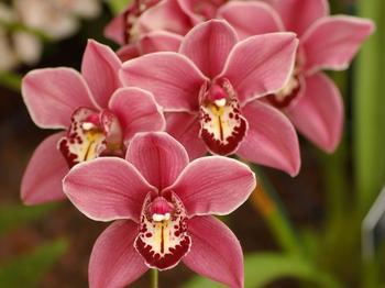 Орхидея дома: приметы и суеверия, связанные с цветком