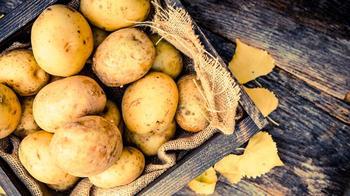 Все о голландских сортах картофеля