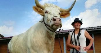 Дрессировщица из Франции воспитала скакового быка