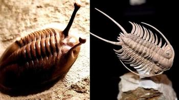 Самые первые животные на Земле могли дышать... ногами