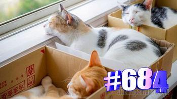 Коты и коробочки (часть 3)🐱😍💯😘