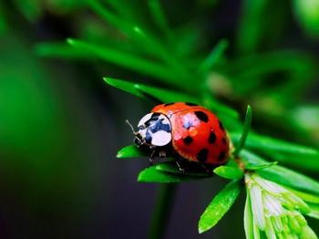 Удивительные факты о насекомых