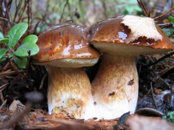 К чему снятся грибы во сне женщине?