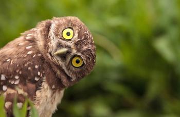 Развеиваем 6 популярных мифов о животных
