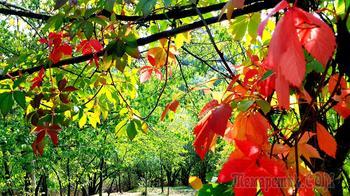 Добро пожаловать осень!