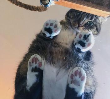 Взгляд снизу: 15 милых котиков с пушистым брюшком