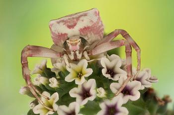 Победители конкурса жуков Luminar Bug Photographer 2020
