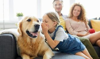Гав, я тебя знаю! Японские учёные заявили, что через 20 лет мы сможем разговаривать с собаками