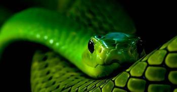 Гороскоп для змеи на 2018 год по знакам зодиака