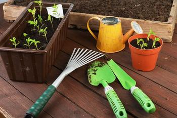 Как вырастить огород на подоконнике
