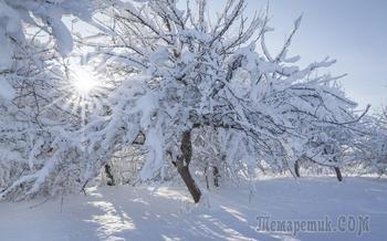 """Нужно ли утаптывать снег вокруг деревьев – аргументы """"за"""" и """"против"""""""