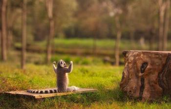 Животные, которые занимаются йогой лучше, чем вы