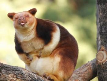 Фото животных всегда радуют