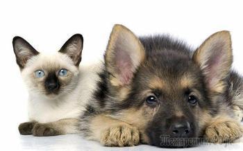 Закон «О ветеринарии» в новой редакции 2020 года – обзор изменений