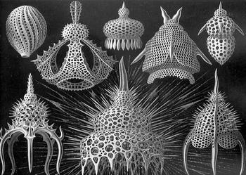 10 сложных и прекрасных микроорганизмов