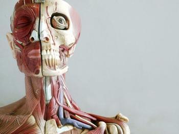 7 удивительных фактов об организме человека