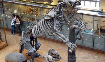 Реальные Годзиллы: вымершие виды, поражающие воображение