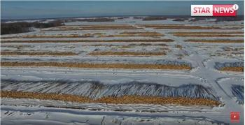 Россия, продажа леса Китаю