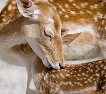 Фотограф показал трогательную связь между матерями и их детьми мире животных