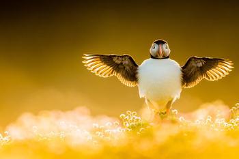 Победители конкурса на лучшие фотографии птиц Bird Photographer of the Year 2021