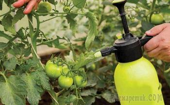 Календарь обработки томатов от болезней и вредителей