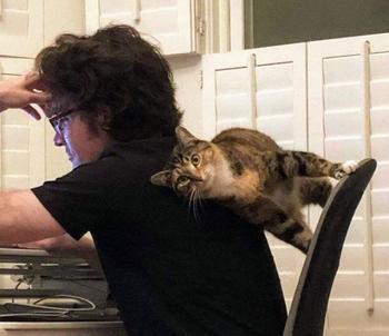 Кошки, нарушающие законы физики