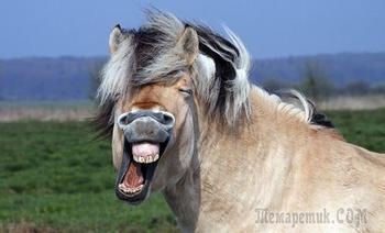 Смешные и забавные животные