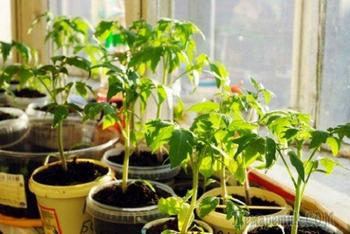 Как использовать йод в саду и огороде – инструкция по применению