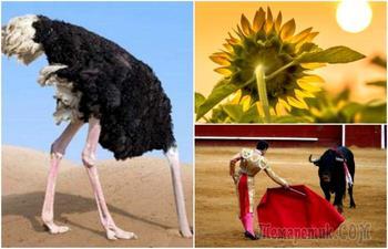8 мифов, которые были опровергнуты, но по-прежнему бытуют в обществе