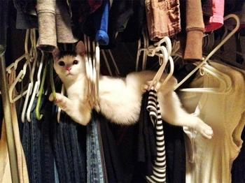 Лучшие фотографии кошек